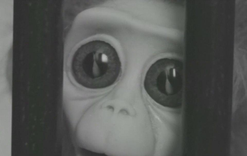 Still from 'Monkey Love Experiments'